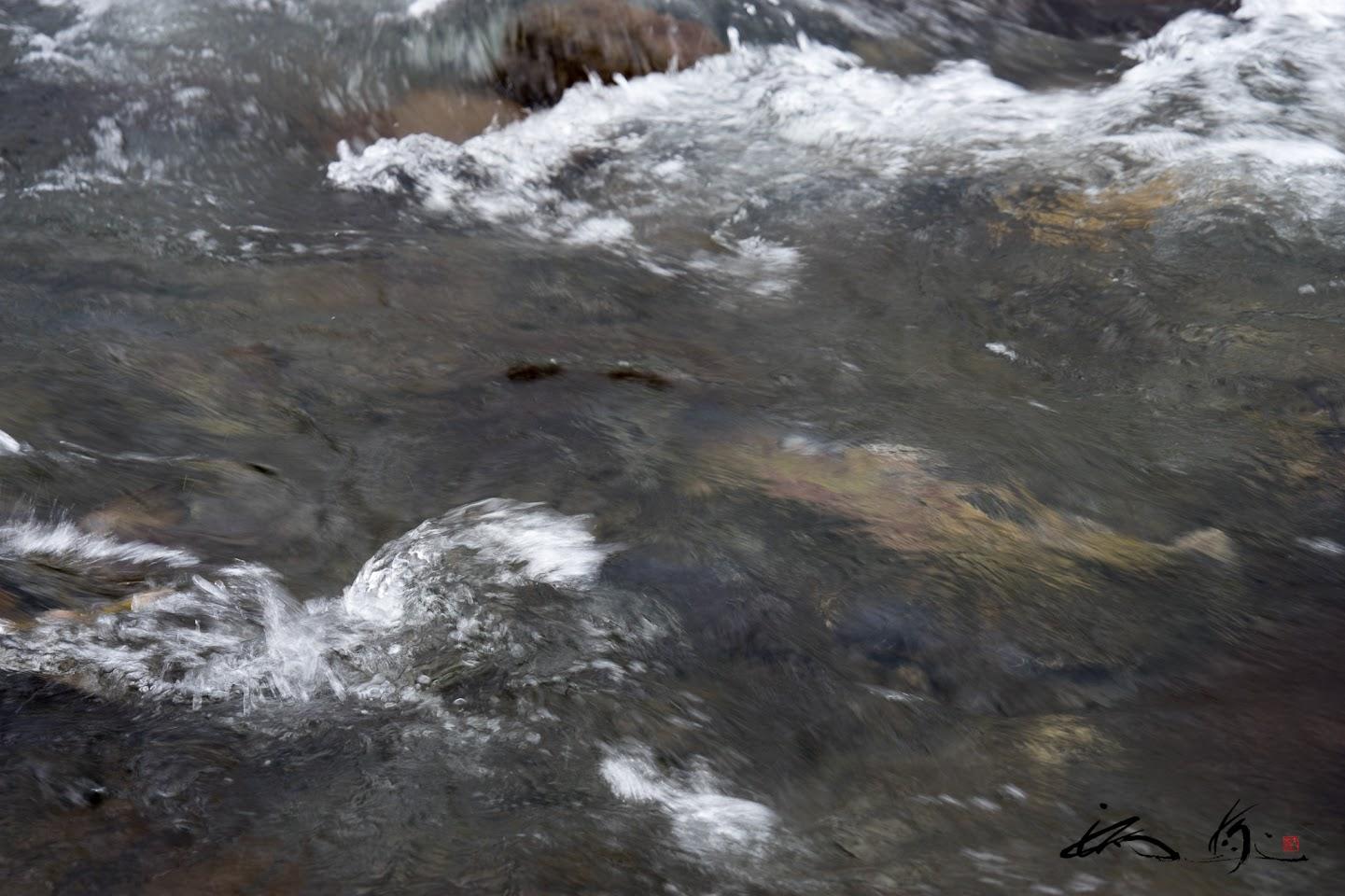 命がけで川を上る鮭