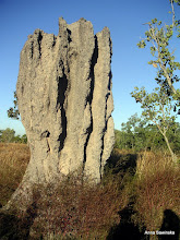 Photo: Cathedral termite mounds