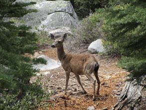Photo: Mule deer
