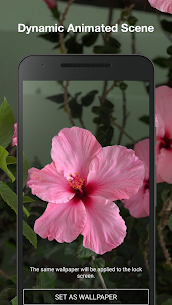 Beautiful Flowers Live Wallpaper 1.2 Mod Android Updated 2