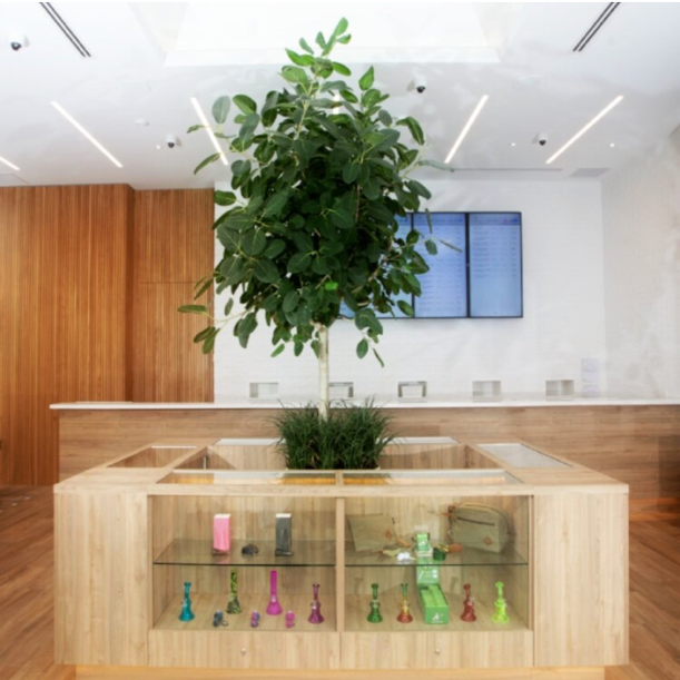 A picture containing indoor, ceiling, plant, wood  Description automatically generated