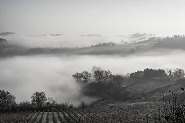 Nebbiolina in valle di MARIA ELENA CAMILLI