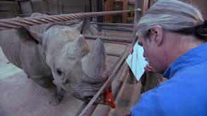 Anti-Poaching Patrol thumbnail