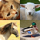 Animal Quiz Game for PC-Windows 7,8,10 and Mac