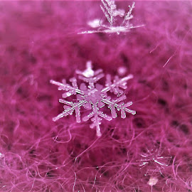 Snowflake on Pink by RichandCheryl Shaffer - Nature Up Close Water