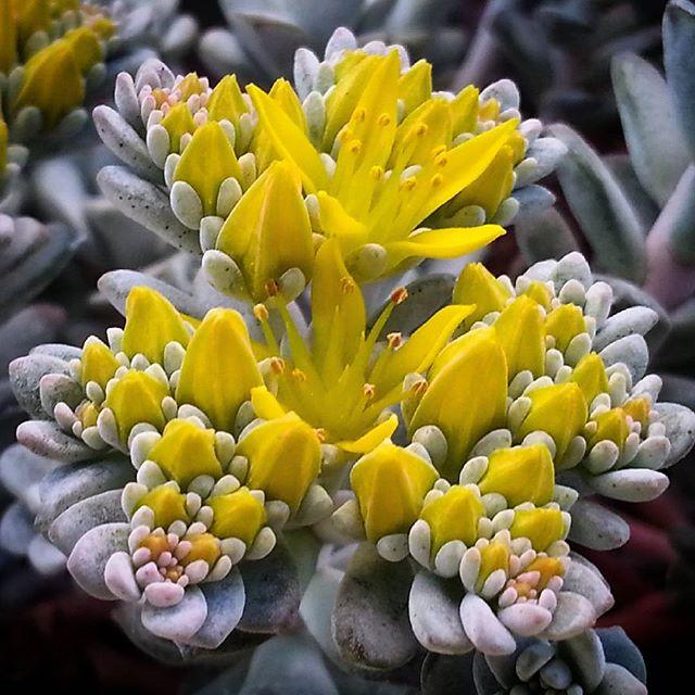 Il grigio si veste di giallo e festeggia la primavera   di naboo77