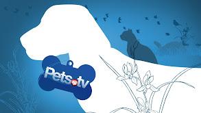 Pets.TV thumbnail