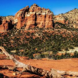 Red Rocks of Sedona by Dave Walters - Landscapes Deserts ( western landscape, az., belle rock nature red color, landscape, sedona, rocks, lumix fz2500,  )