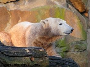 Photo: Knut geniesst die Sonne :-)