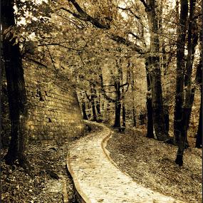 by Tatjana Koljensic - Landscapes Forests