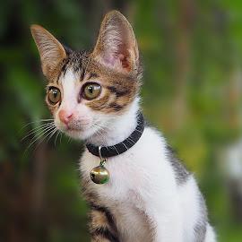 by Iwan Ramawan - Animals - Cats Portraits