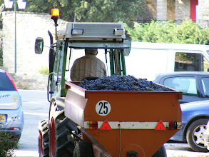 Photo: And here's where it all starts, with this reminder of the grape harvest underway, and being carted right through town.