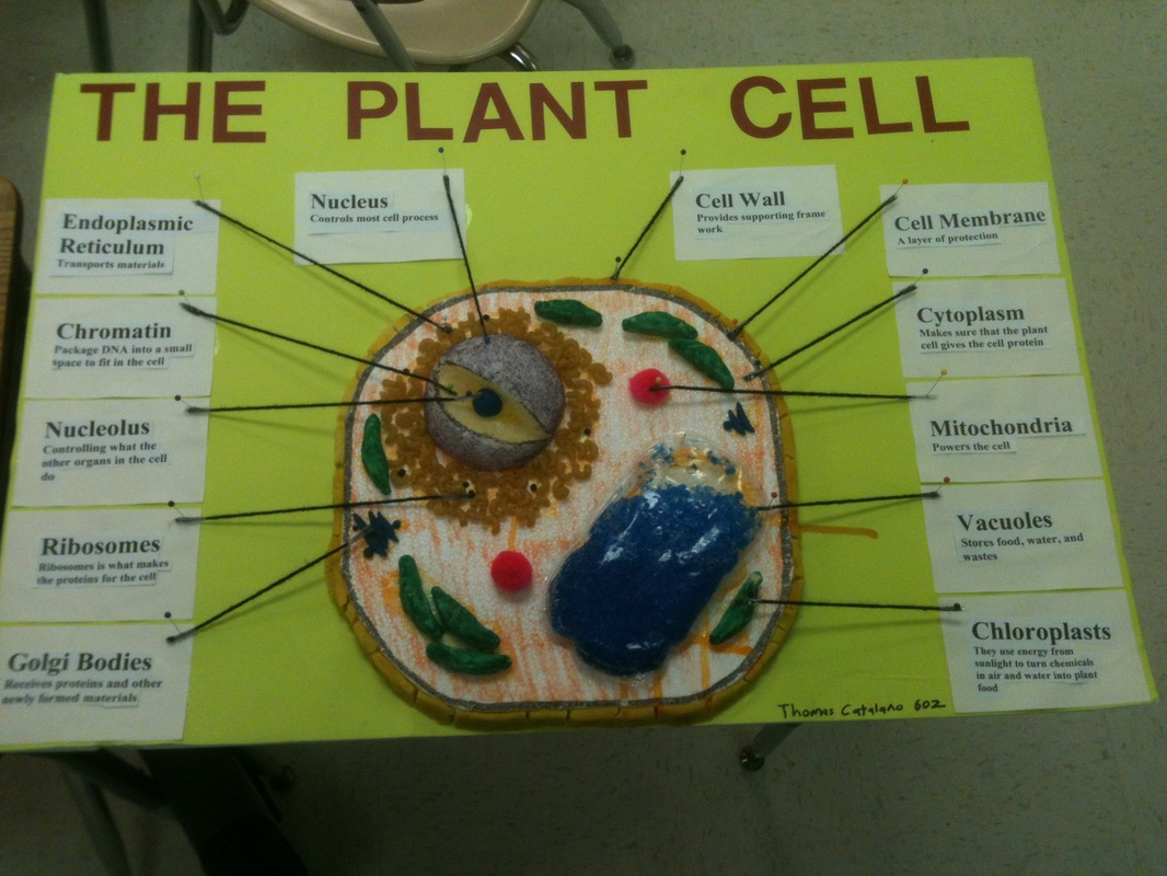 Simple Plant Cell Diagram With Labels