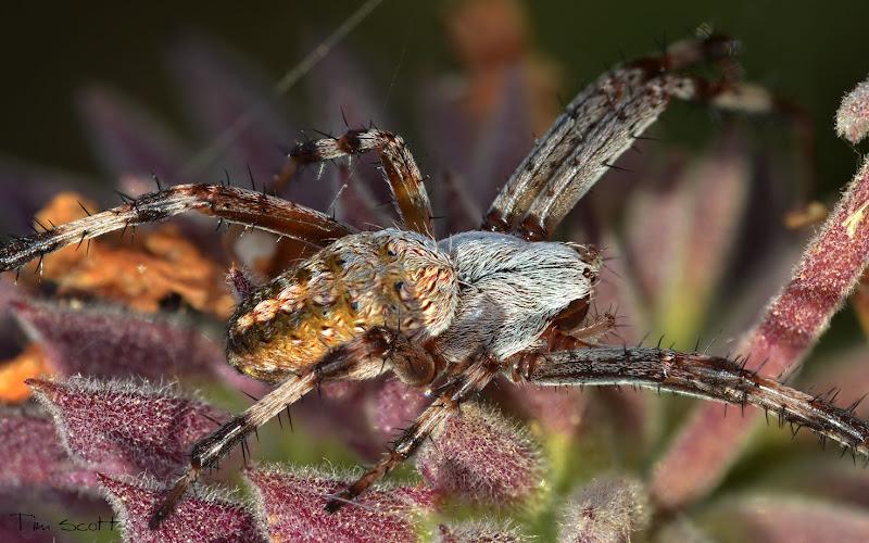 Photo: Spider No.3790