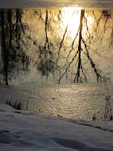 Photo: Reflection of trees and morning sunlight through the icy pond at Eastwood Park in Dayton, Ohio.