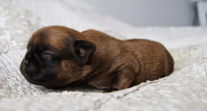Photo: Hierners Number Of The Beast 10 days old