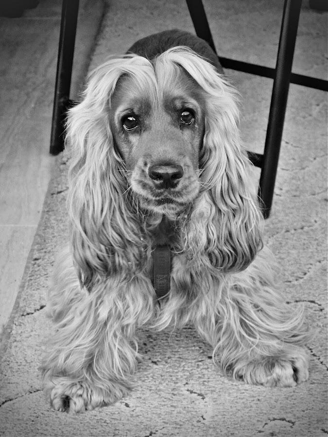 Oskar by Ozlem Mehmet - Animals - Dogs Portraits (  )