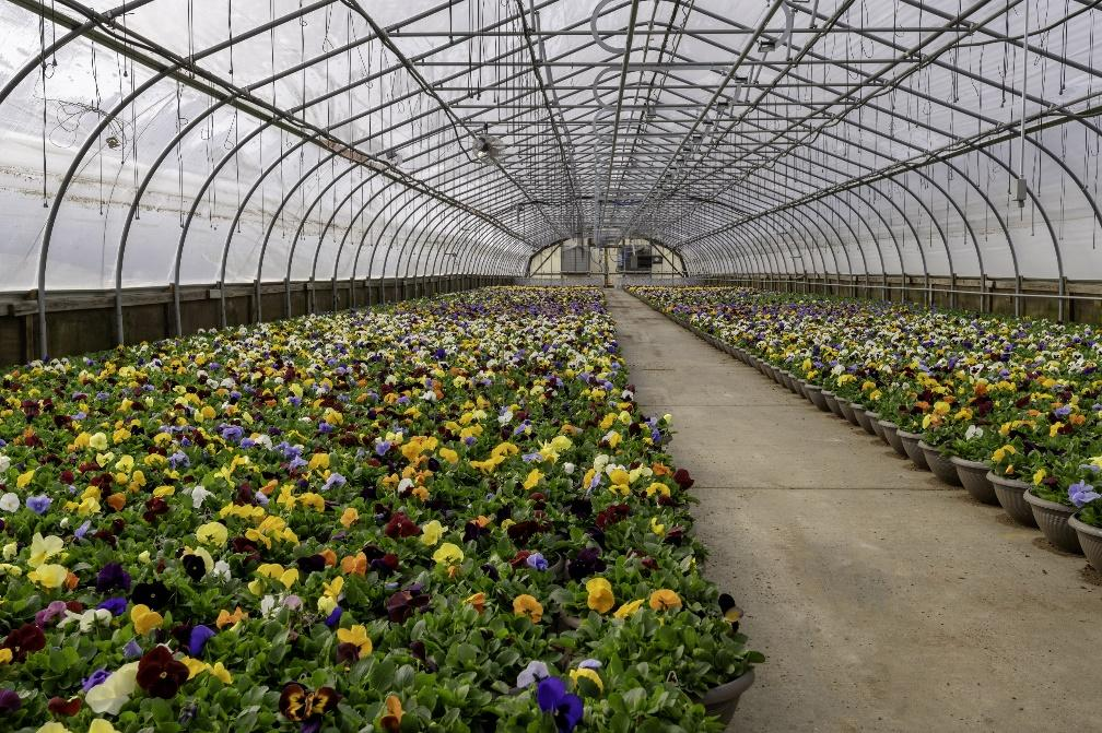A picture containing greenhouse, walkway  Description automatically generated