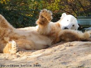 Photo: Knut setzt sein Entspannungsprogramm fort ;-)