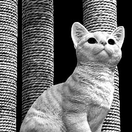 Fabulous Feline 1 Black And White by RMC Rochester - Black & White Animals ( macro, random, nature, cat, animal, black and white, abstract )