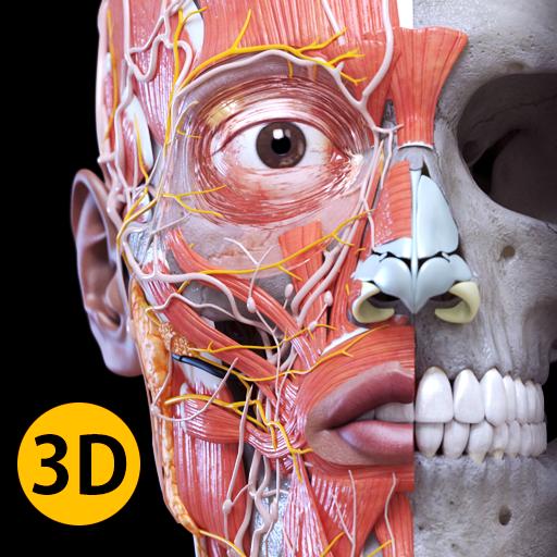 Anatomia - Atlas 3D