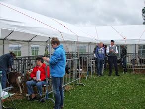 Photo: Keuringsterrein van geitenfokvereniging 'DES' te Hagestein 29 juni 2013.