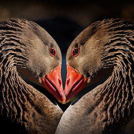 Lovey Gooses by James Harrison - Digital Art Things ( goose )