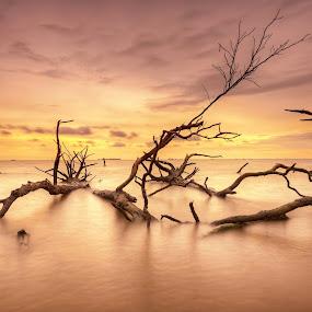 The Fallen Guardian by SyaFiq Sha'Rani - Landscapes Waterscapes ( tree, sunset, fallen, guardian, mangrove )