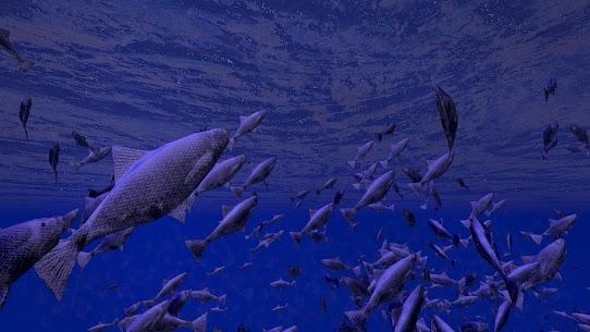 Be a Fish – VR Simulator 3