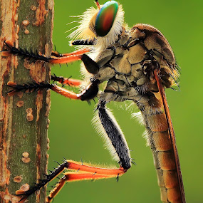 Here i'm by Faiq Alfaizi - Animals Insects & Spiders