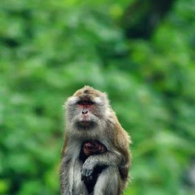 Little monkey.. by Sony Arezki - Animals Other Mammals
