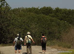 Photo: Birding the mangroves at Laguna de Quelele
