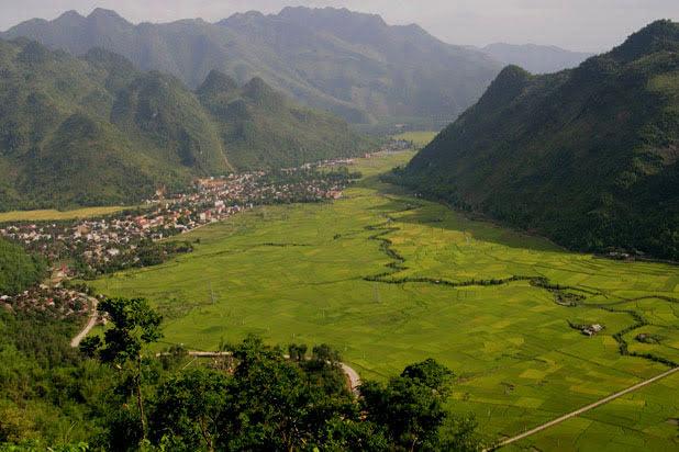 Plantation de riz à Mai Chau