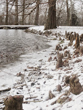 Photo: Roots by a lake in the snow at Eastwood Park in Dayton, Ohio.