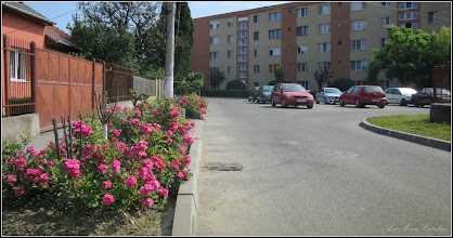 Photo: Str. Trandafirilor - 2017.06.05