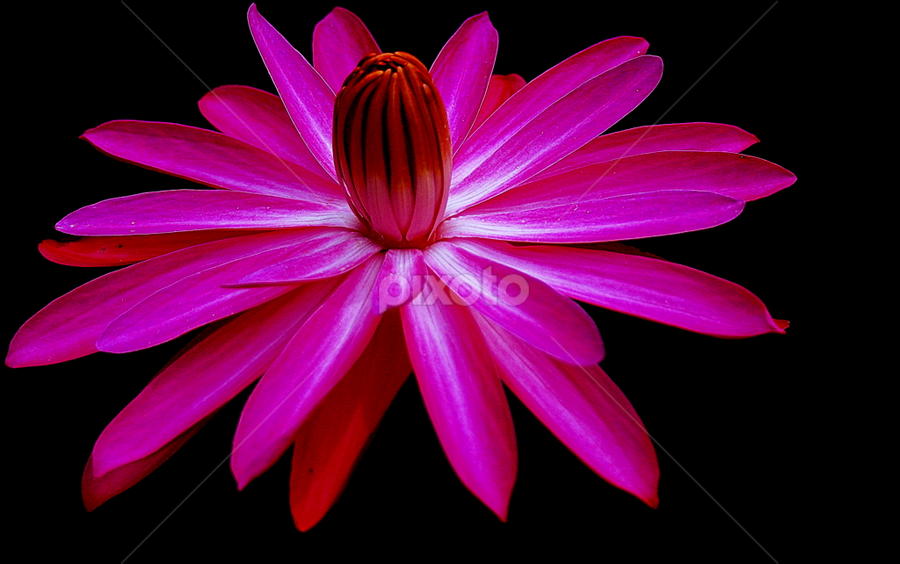 by Syamsul Rustam - Nature Up Close Flowers - 2011-2013