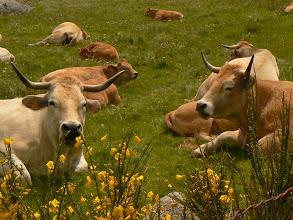 Photo: un élevage authentique et extensif alliant tradition et modernité