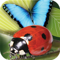 Popar Bugs icon