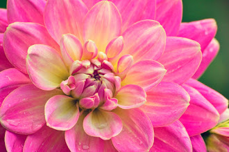 """Photo: """"It's not enough to notice the beautiful flowers as you walk past them. You need to reach for their soft petals, feel their essence, remember what it is to grow."""" ~ Christy Ann Martine   http://www.redbubble.com/people/inspiraimage/works/23981782-beautiful-pink-dahlia-flower    #hqspflowers +HQSP Flowers curated by +Francine Vanlé +Iva Pas Photography +kaatje jansen +Wayne Lu #PhotoManiaUK +Photo Mania UK curated by +Hans-Juergen Werner +Walli Werner +Janusz Bednarski and +Chandro Ji #flowercolors +//flower colors// #flowerpower +FLOWER POWER+Edith Kukla #naturephotos +NATURE & MACRO Photos #macro4all #macrogallery #pinkcircle #flowers #flowerphotography #pink #garden #floralphotography #Nature #Beautiful #NaturePhotography"""