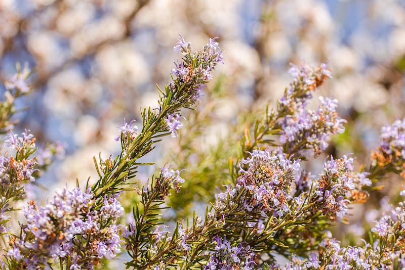 Colori di Primavera di elyrgl
