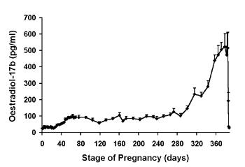 Concentraciones promedio (+sem) de estradiol 17β sérico en camellas gestantes.