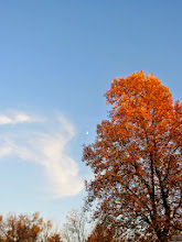 Photo: Clouds blowing towards the moon and an orange autumn tree at Eastwood Park in Dayton, Ohio.