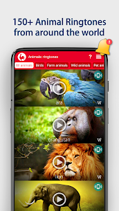 Animals: Ringtones 1