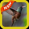 Hummingbird Wallpaper icon