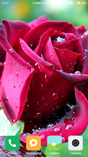 Best Rose Wallpapers - náhled