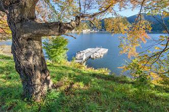 Photo: An old Autumn tree at lake Kawaguchiko, at the base of Mt Fuji
