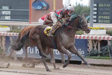 Splendorofthesea (Boboman) se impuso en Handicap (1000m-Arena-HCH).