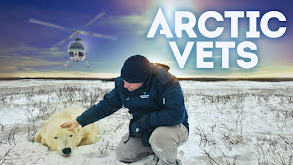Arctic Vets thumbnail