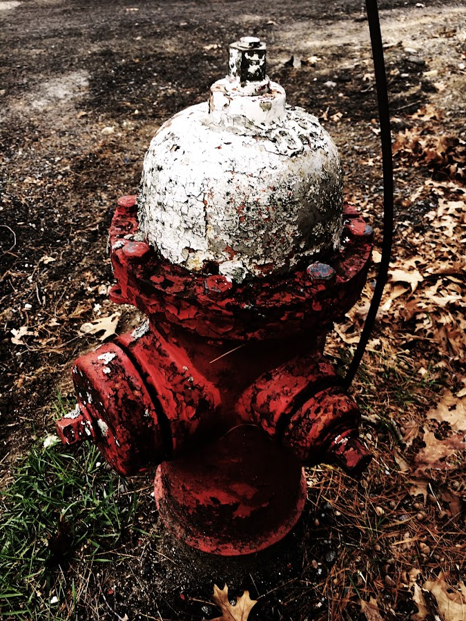 Fire Hydrant with Crusty Paint by Kristine Nicholas - Novices Only Objects & Still Life ( firefighter, old, bolt, grass, still life, white, rusty, object, bolts, fire, red, pattern, brown, rust,  )