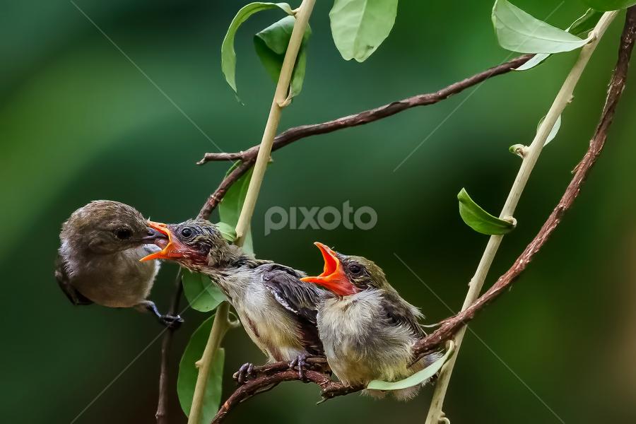 My youngest turn (2) by Husada Loy - Animals Birds